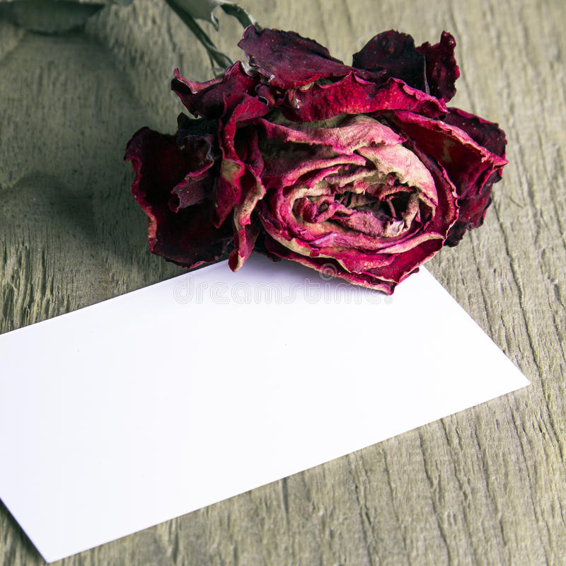Blank business card and the dried rose. On wooden background royalty free stock photos