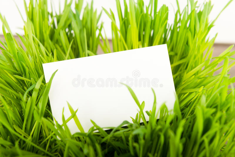 Blank business card. In fresh green grass stock photography