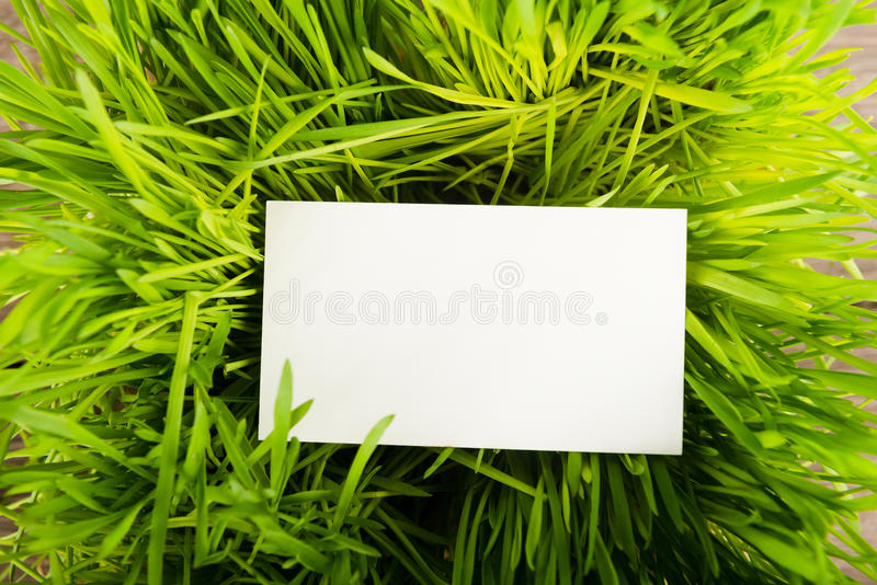 Blank business card in green grass royalty free stock photography