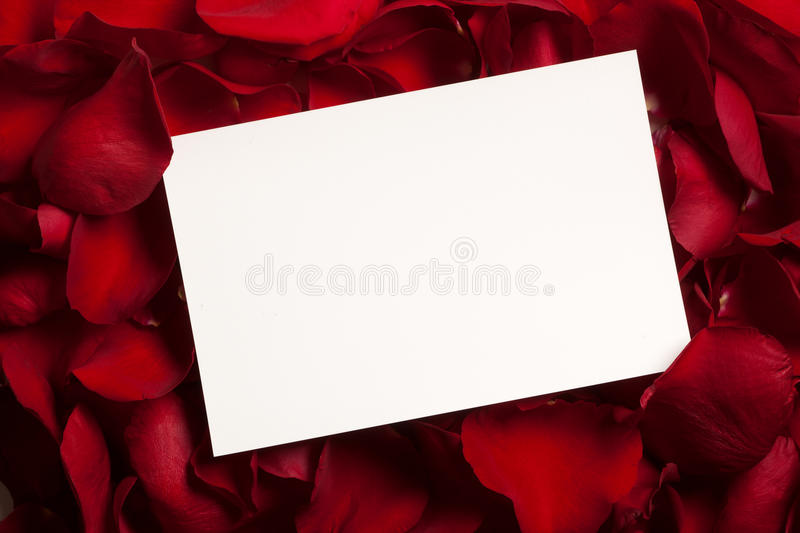 Blank card on a bed of red rose petals royalty free stock image