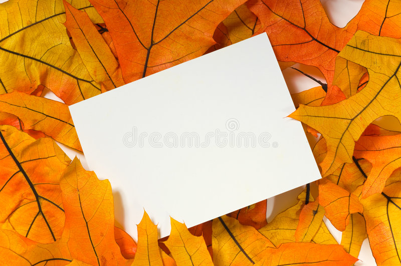 Blank card with fall leaves. White, blank notecard in the middle of brighty colored fall leaves add copy stock photos