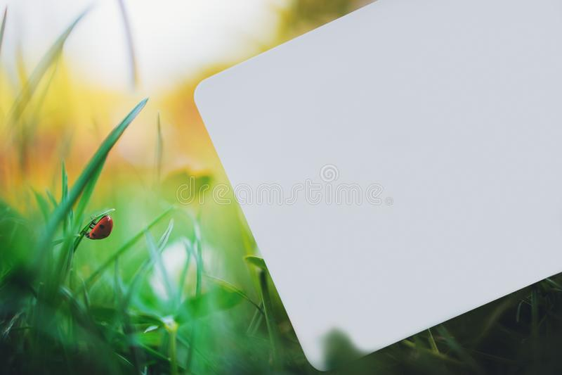 Blank card on green grass with ladybug on park. Blank card on grass with ladybug royalty free stock images