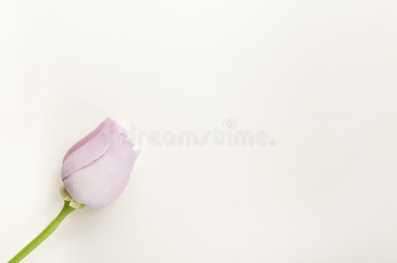 Download Blank Flower Celebration Mail Stock Photo - Image: 21115422