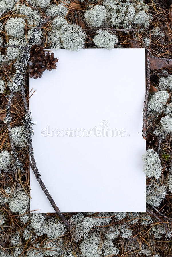 Blank form, frame for filling in the text. Blank letterhead, frame for filling text, outdoors in the northern forest royalty free stock images