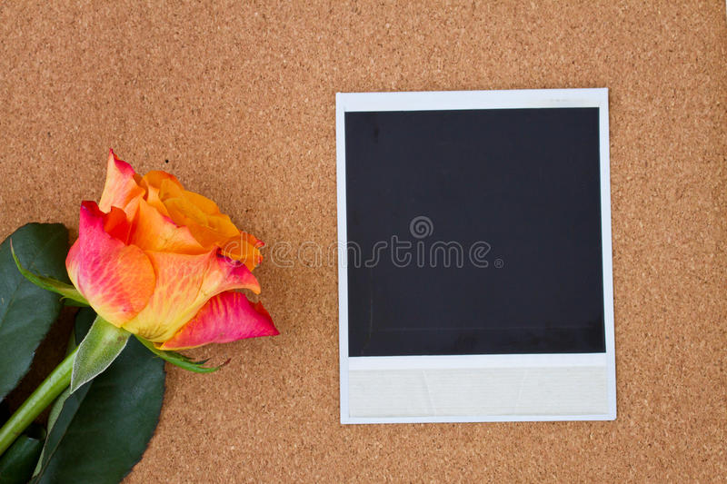 Download Instant Photo With One Rose Stock Photo - Image: 29845224