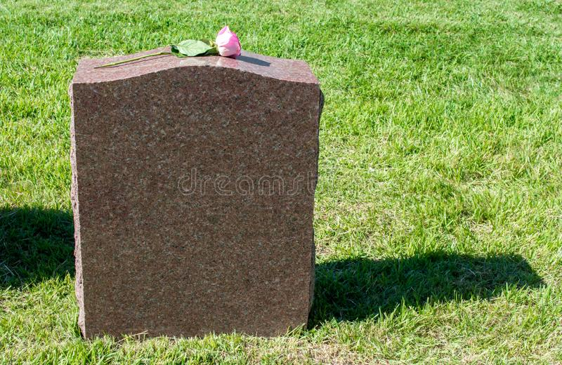 Solitary rose displayed on a blank marble gravestone with copy space royalty free stock image