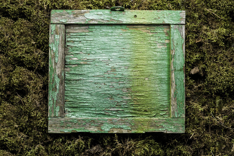Blank old square wooden frame on moss background stock photos