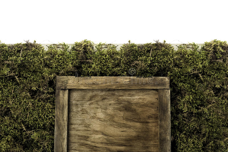 Blank old square wooden frame on moss background royalty free stock photos