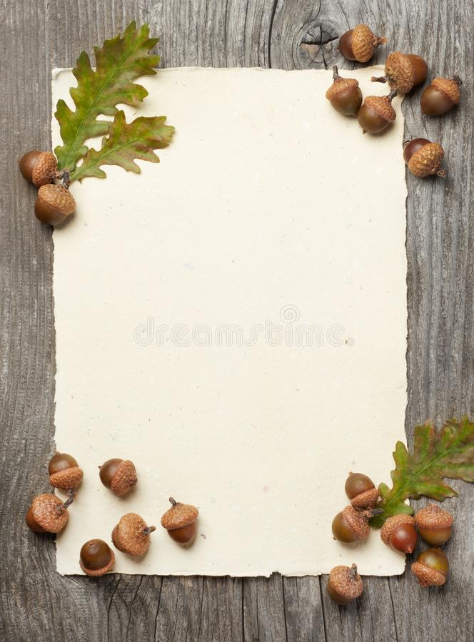 Blank paper and acorns stock photo