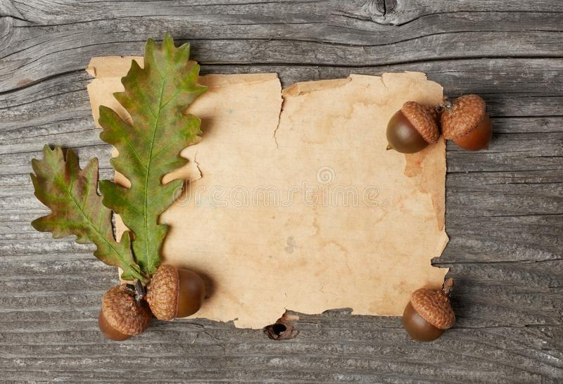 Blank paper and acorns royalty free stock photo