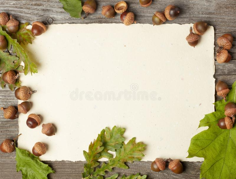 Blank paper and acorns royalty free stock photos