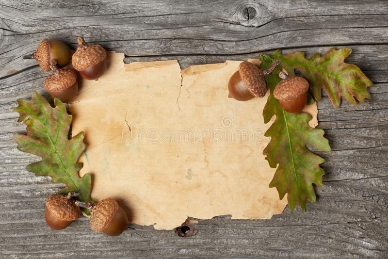 Blank paper and dried acorns stock images