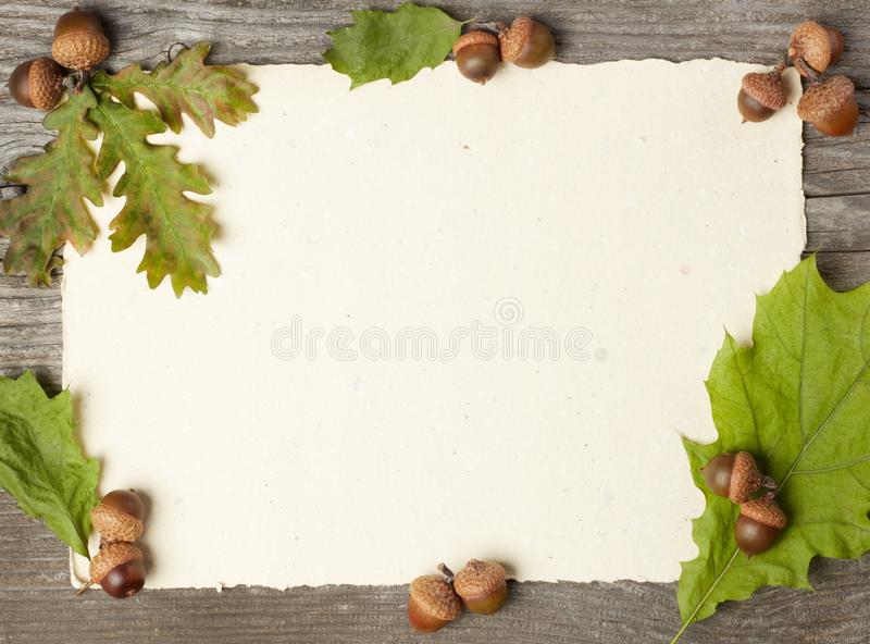 Blank paper and dried acorns stock photography
