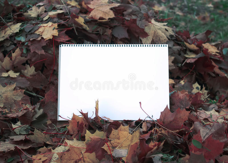 Blank paper on fall leaves. Blank paper on fall autumn leaves on the ground stock illustration