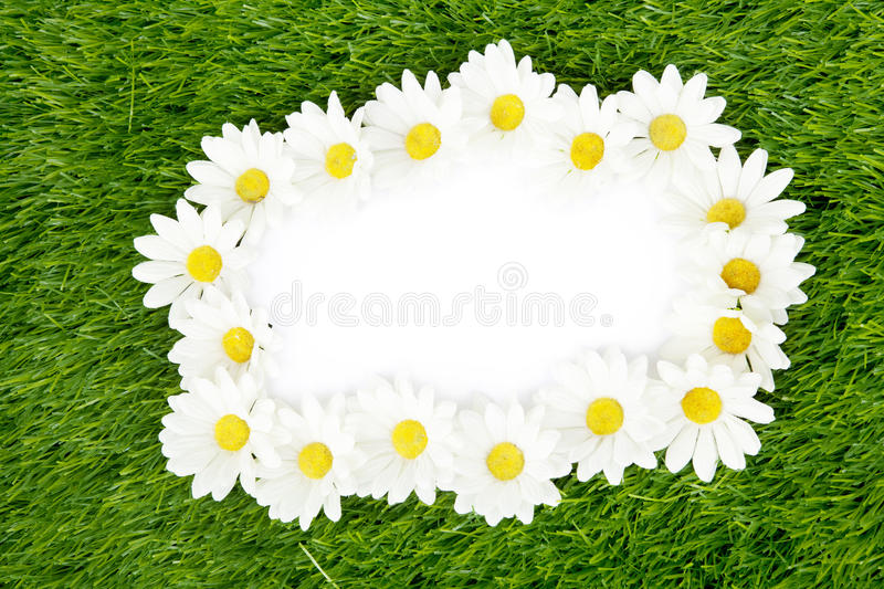 Download Blank Paper Framed With Daisy Petals Stock Image - Image: 23953715