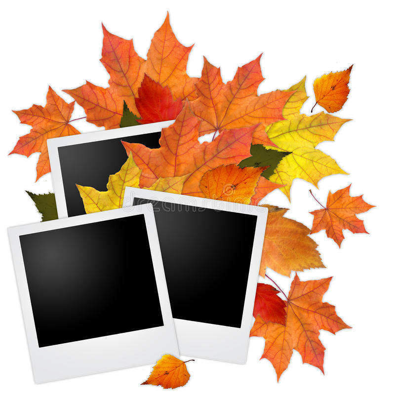Blank photo frames with autumn leaves vector illustration