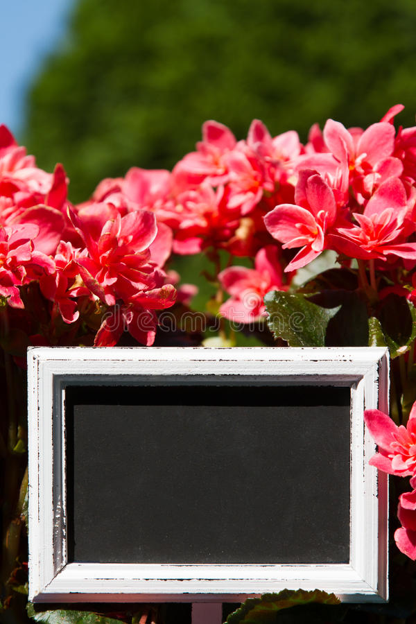 Blank sign in a flower pott stock photo