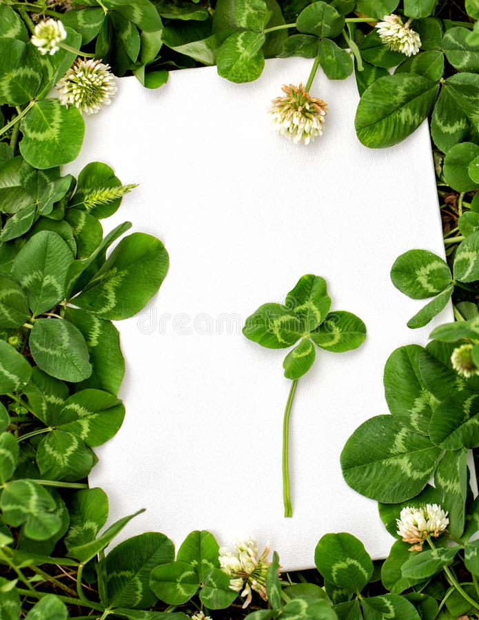 Blank sign with natural fresh shamrocks border and four-leaf clover in the center. St. Patrick`s day frame with clover leaves stock photography