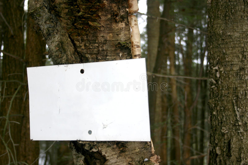 Download Blank sign on tree stock photo. Image of hunting, trespass - 110782