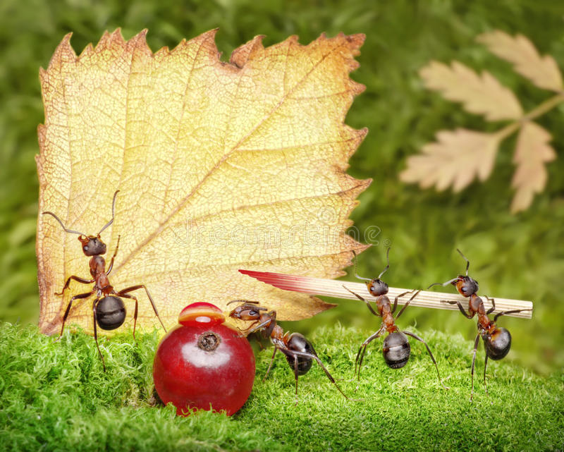 Download Blank, Team Of Ants Writing Postcard, Teamwork Royalty Free Stock Image - Image: 17551496