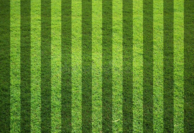 Download Blankt fältgräs fotografering för bildbyråer. Bild av plast - 19787251