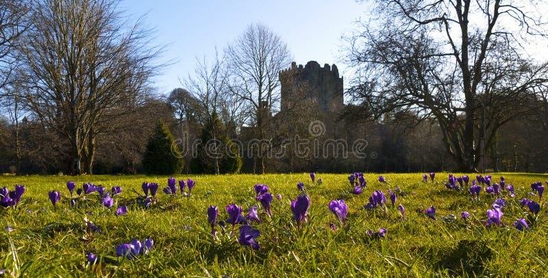 Blarney Castle royalty free stock photography