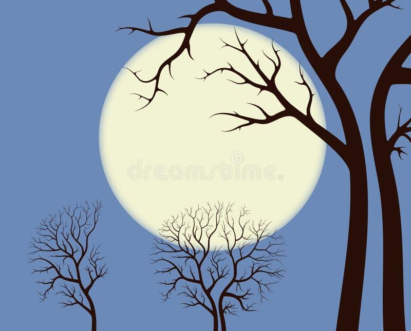 Blask księżyca nad drzewami zdjęcie royalty free