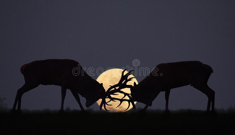 Blasku księżyca bekowisko zdjęcie royalty free