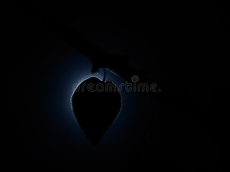 Blasku księżyca cień obraz royalty free