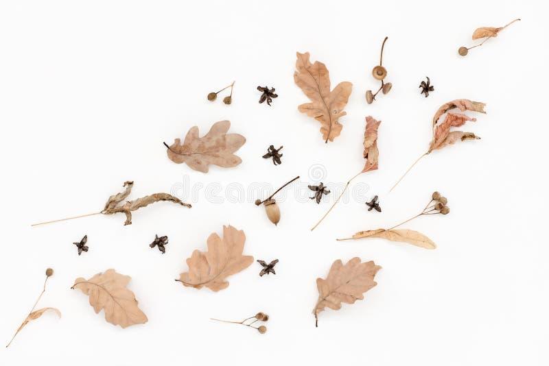 Blasses Muster des Herbstes, Eiche verlässt, Eicheln stockfoto