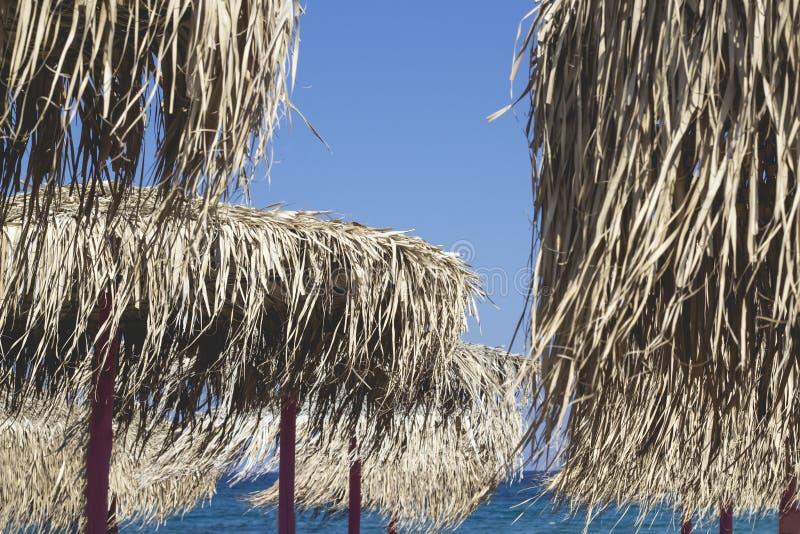 Blast av strandparaply eller slags solskydd som göras av vassen Naturlig materia royaltyfri foto