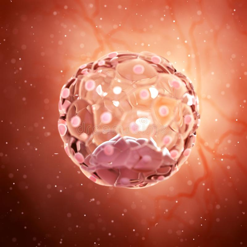 A blastocyst. 3d rendered medically accurate illustration of a blastocyst royalty free illustration