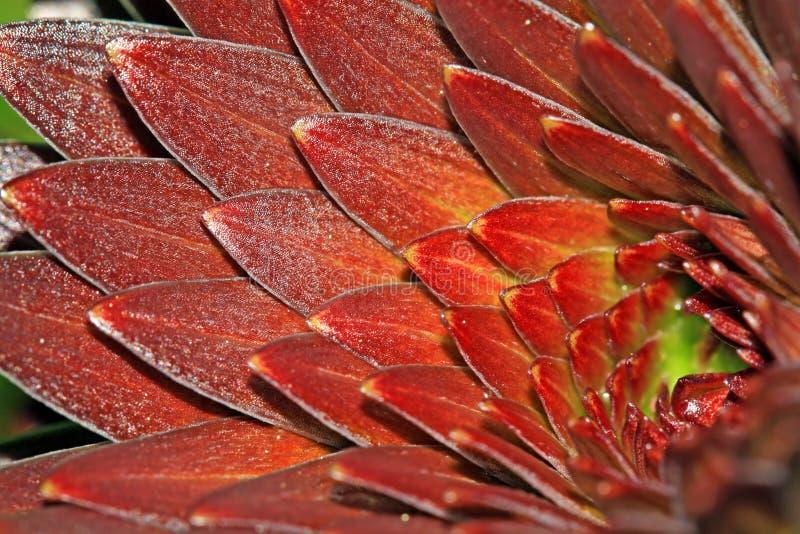 Blatt der Lilien lizenzfreie stockfotos