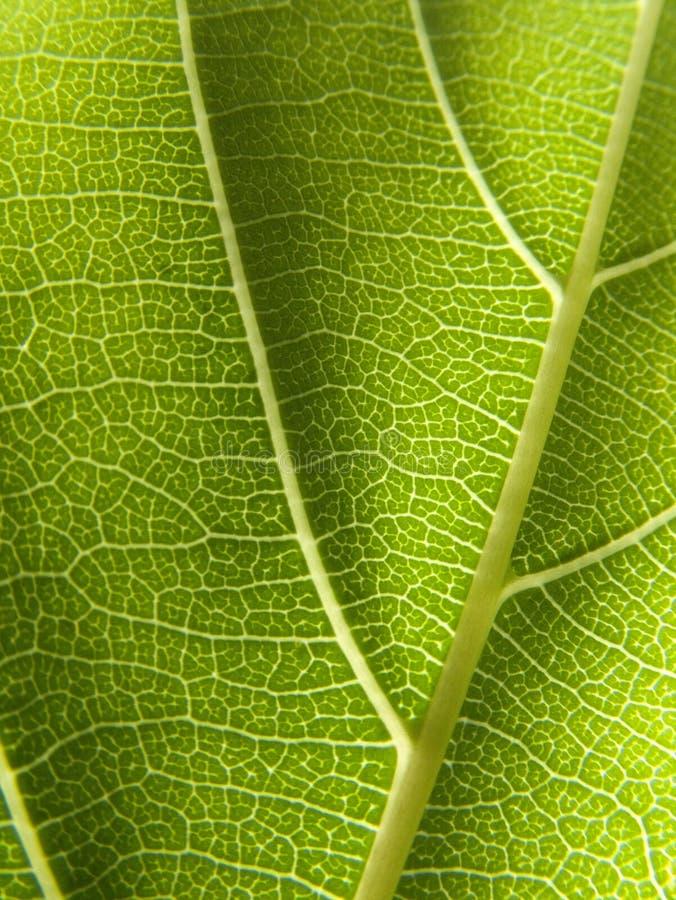 Download Blatt-Detail stockfoto. Bild von vegetation, garten, nave - 866624