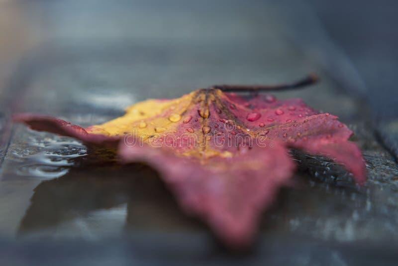 Blatt im Regen stockbilder