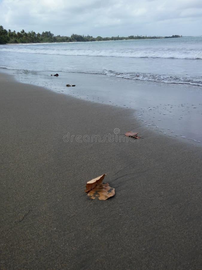 Blatt im Sand lizenzfreies stockbild