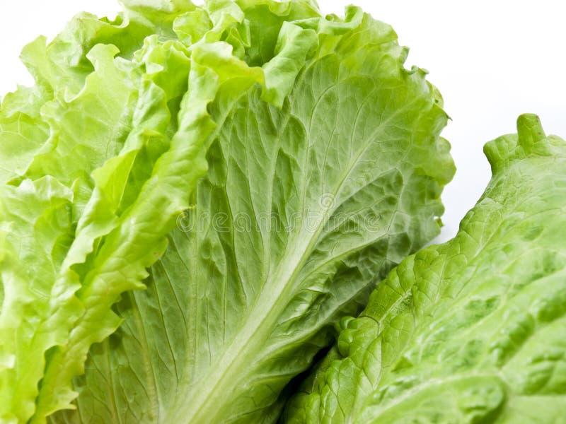 Blatt-Kopfsalat stockbilder