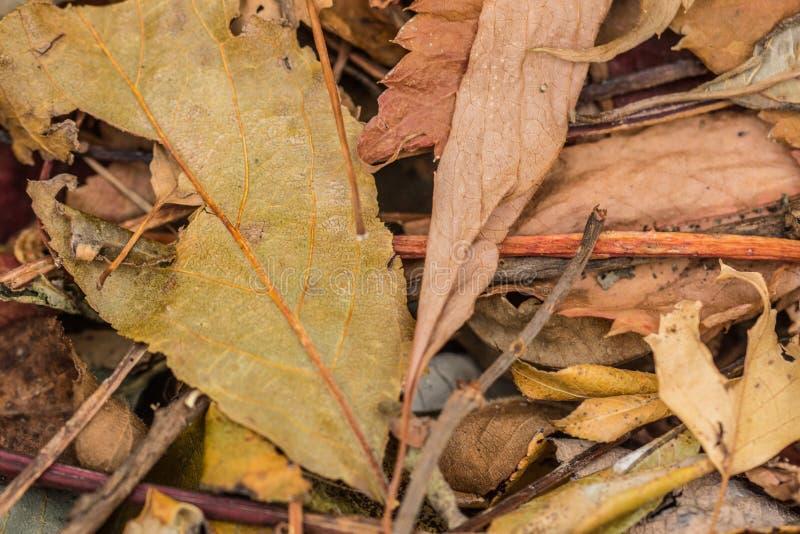 Blatt-Mischung im Herbst lizenzfreie stockbilder