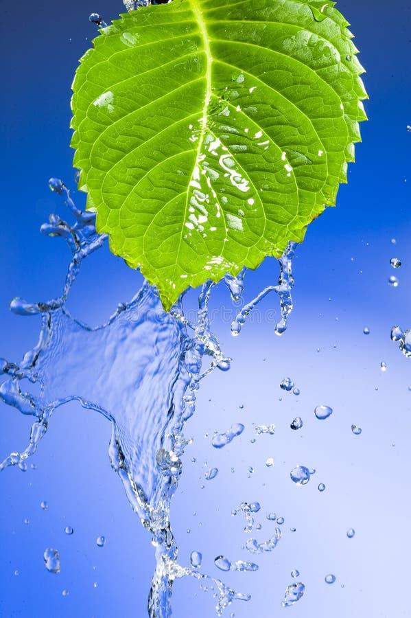 Blatt mit dem Spritzen des Wassers stockbild