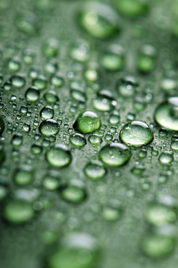 Blatt mit Tropfen des Wassers lizenzfreies stockbild