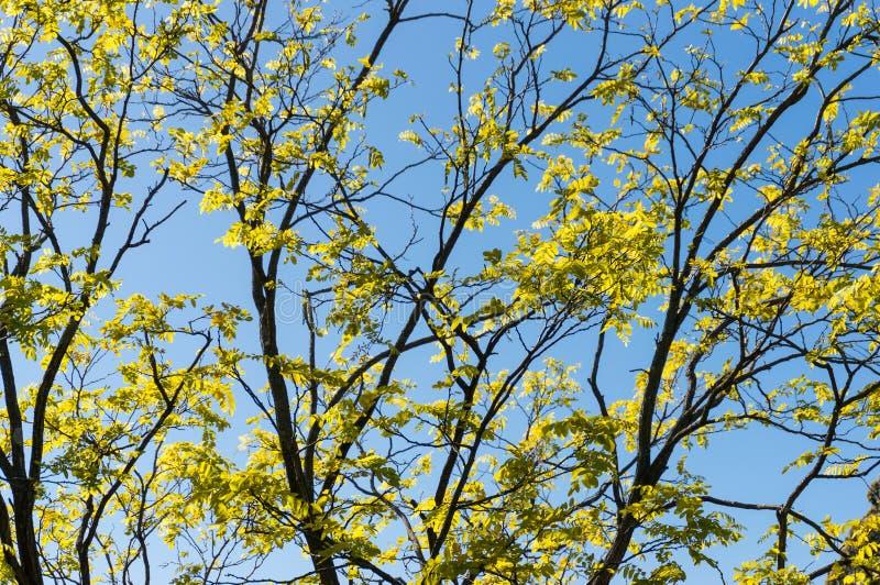 Blatt-Naturhintergrund des bunten Herbstes gelber, Fallbaumaste lizenzfreie stockfotos