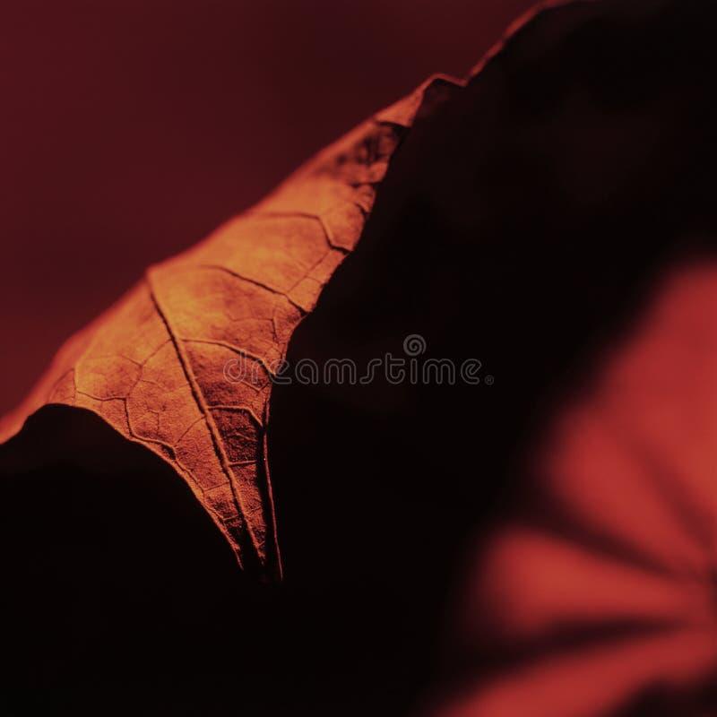 Blatt-Rot 01 stockbild