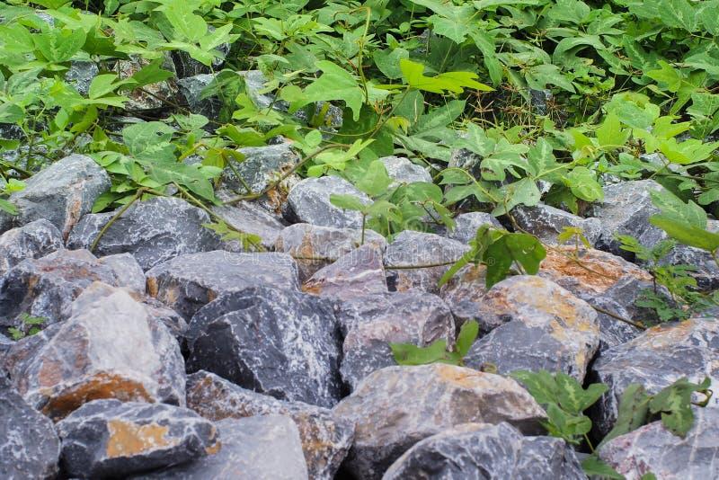 Blatt und Felsen in Thailand stockfoto