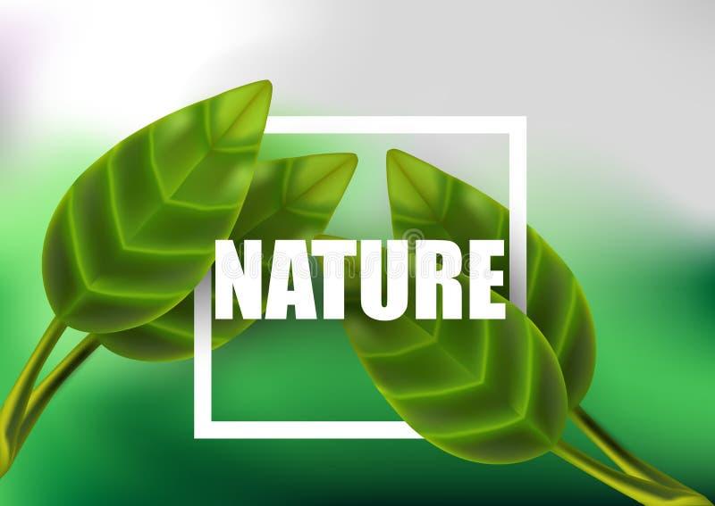 Blatt verlässt realistisches Naturhintergrund des Vektors Grün lokalisierten Betriebs lizenzfreie abbildung