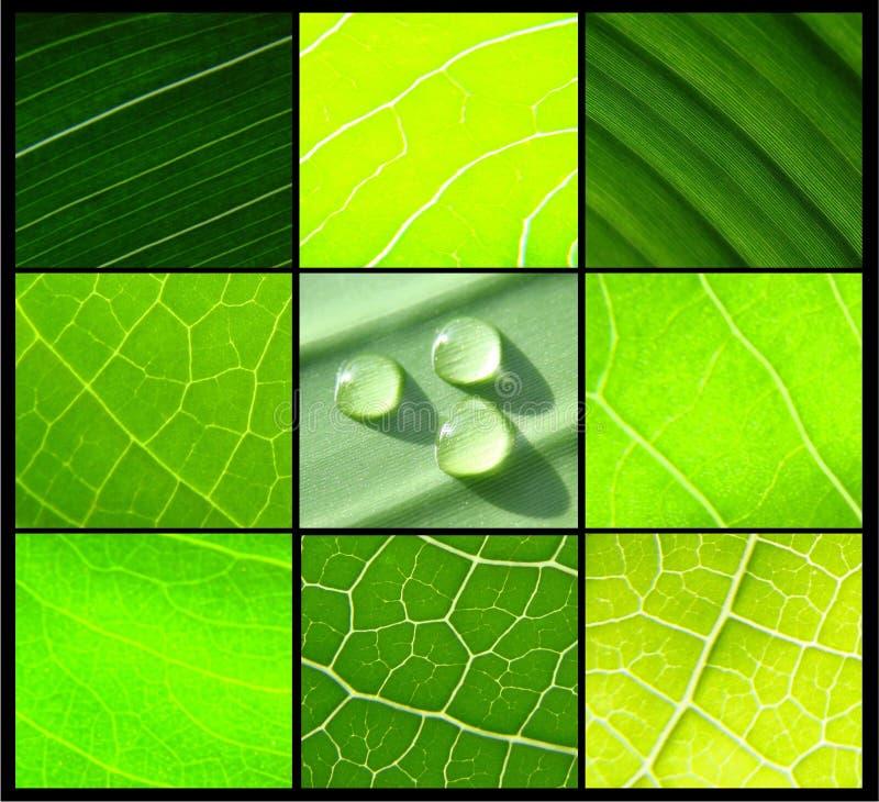 Blatt-Wassertropfen der Collage grüne auf Schwarzem lizenzfreie stockbilder