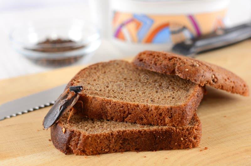 Blatta su alimento nella cucina Il problema è nella casa a causa delle blatte Blatta che mangia nella cucina immagine stock
