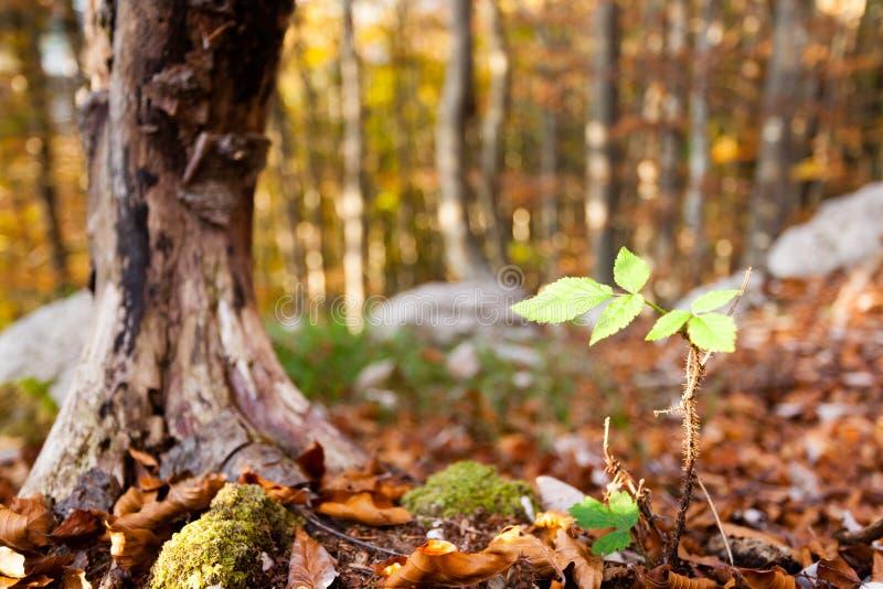 Blattabschluß der wild wachsenden Pflanze oben, Herbsthintergrund Schönheit in der Natur lizenzfreies stockfoto