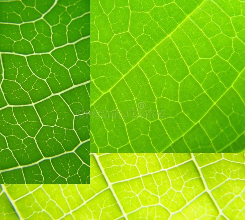 Blattcollagengrün lizenzfreies stockbild