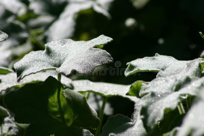 Blattgrün lizenzfreie stockfotografie