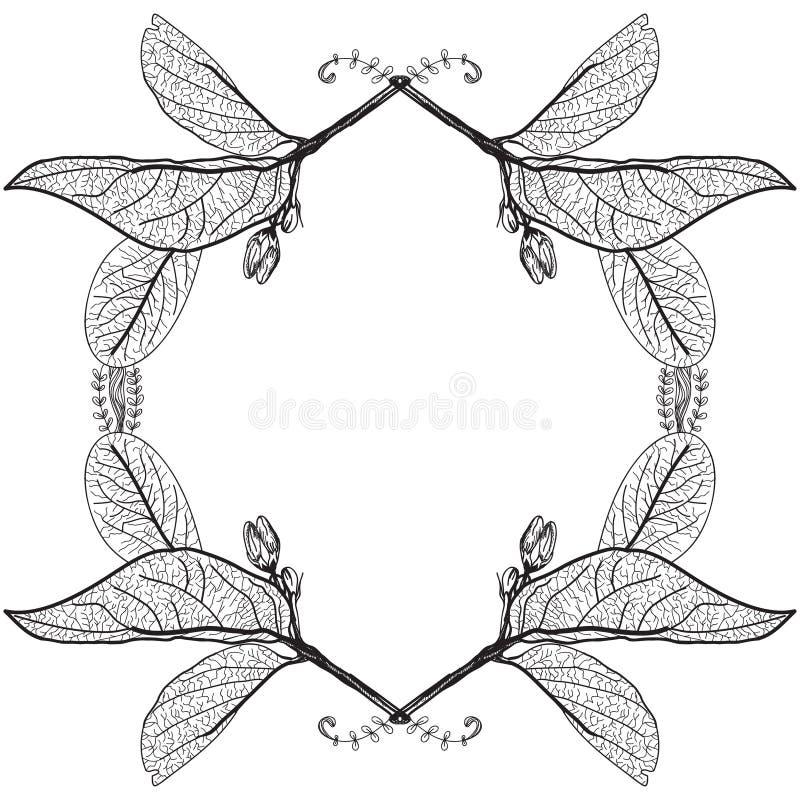 Blattkonturen auf einem weißen Hintergrund Rosafarbener Blumenrand Skizze fra vektor abbildung